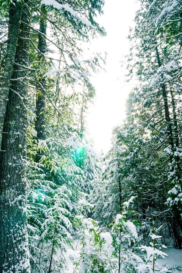 woods, trees, nature - 7valued | ello