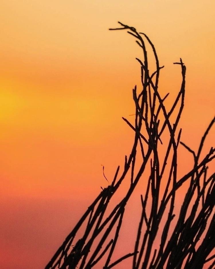 :sunny:️Sunset wave:sunny:️  - Sunset - gevalls | ello