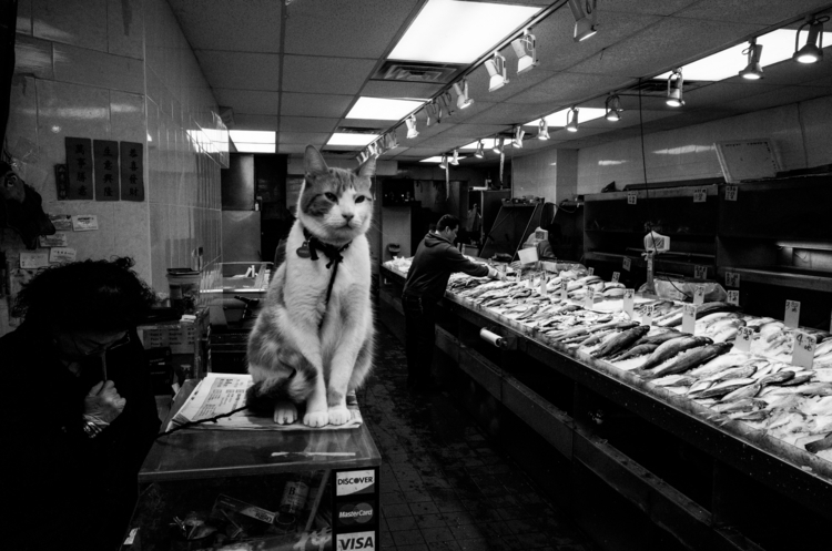 Hunts fish. Guards - streetphotography - boenau | ello
