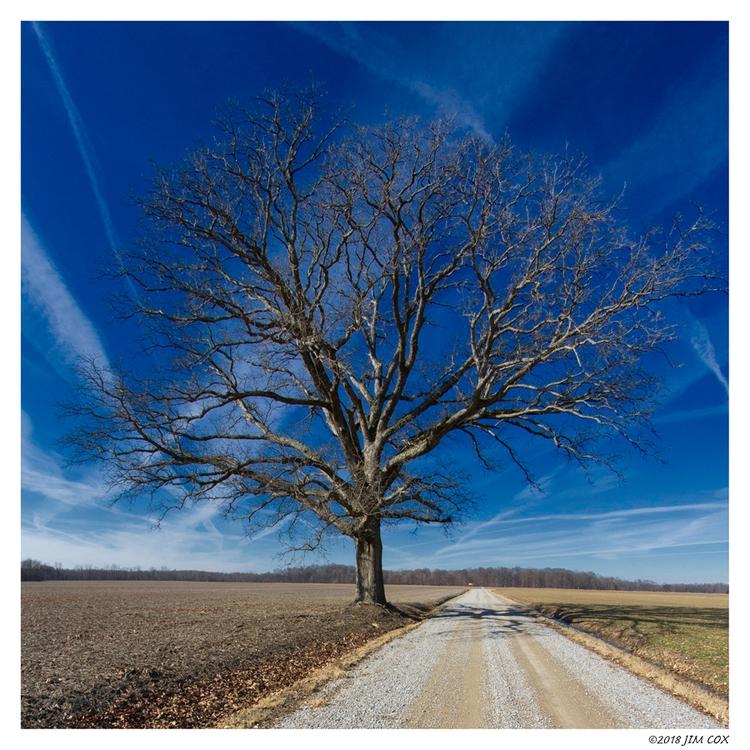Roadside Tree - colorphotography - jascox | ello