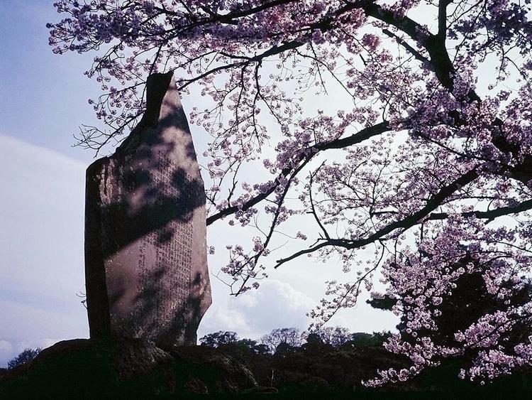 Sakura season Japan - japan, fujifilm - zen_zanon | ello