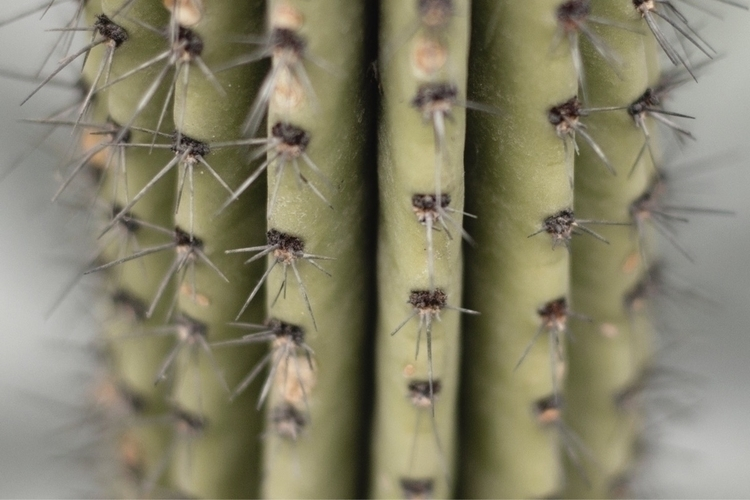 cactus, cactusadiccted, photooftheday - maredithph | ello