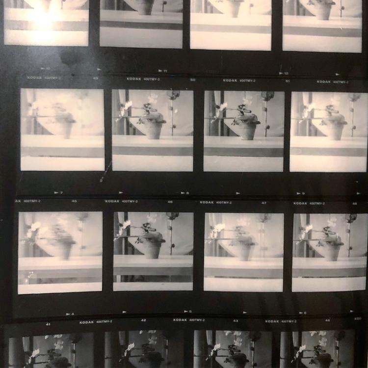 120mm, film, contactsheet, blackandwhite - iamchayanne | ello