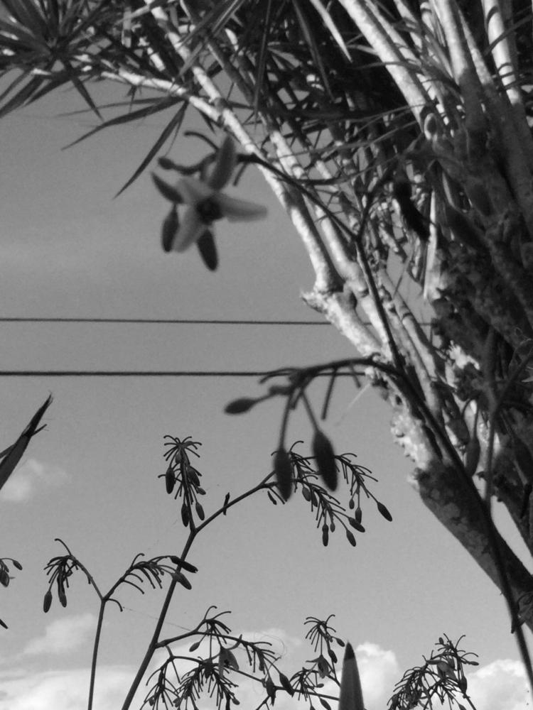 Plants, Palms, Electric Lines P - mikefl99 | ello