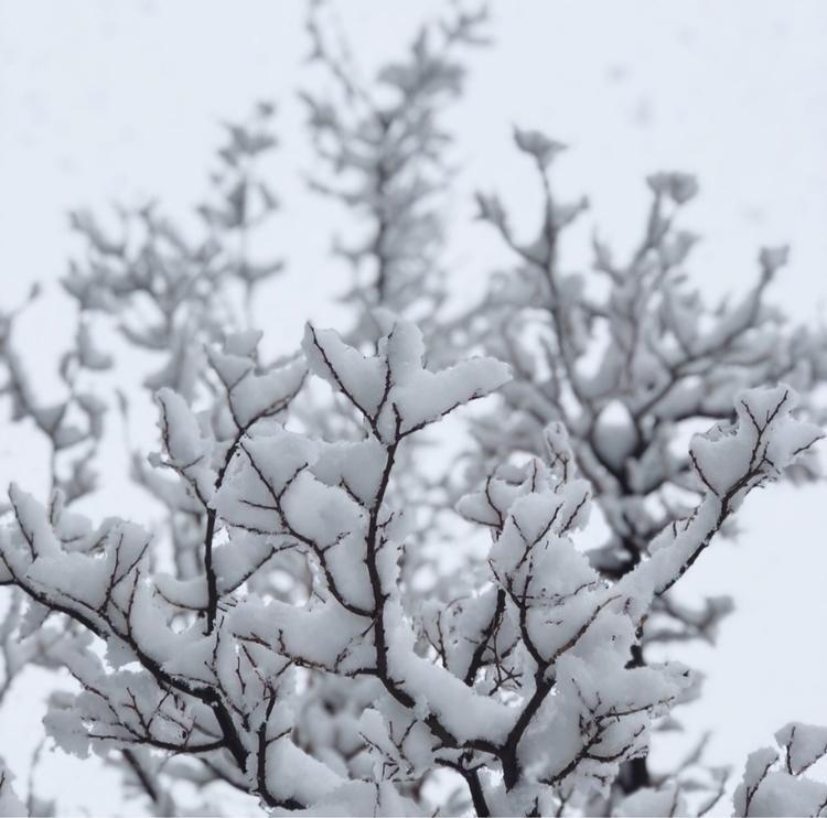 "snow falls, nature listens"" – A - spirit_of_the_mountain | ello"
