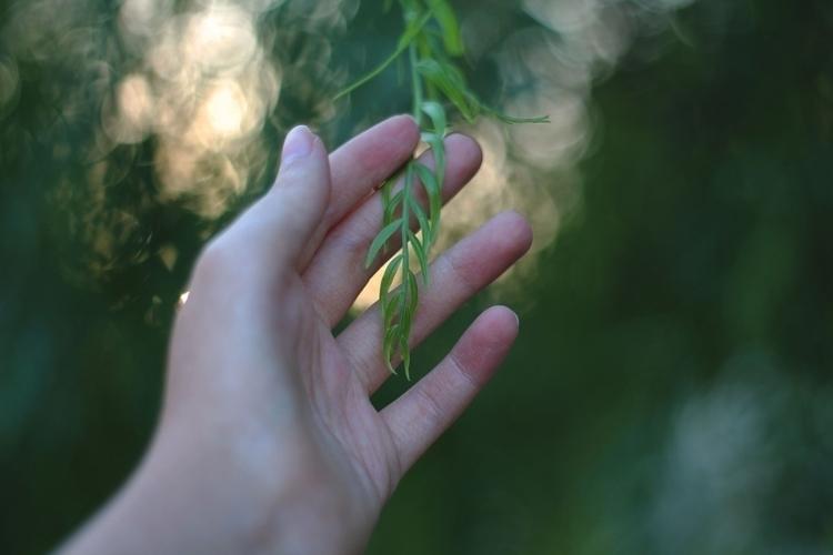 Green vibes - photography, nature - albxc | ello