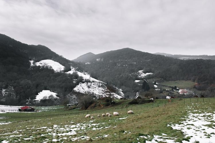 navarra, landscape, animals, nature - nabilgallera | ello