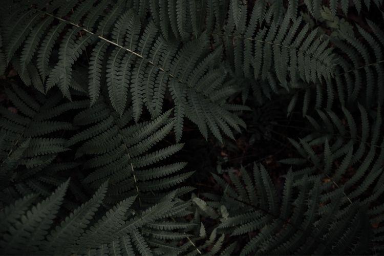 Forest greens - wandernwill   ello