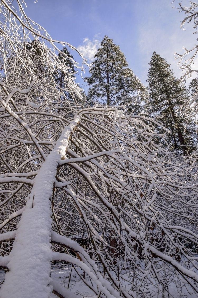 SNOW - megnboyd | ello