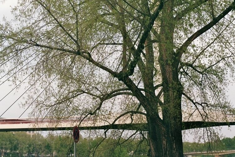 Spring time - years revisited - Mannheim - mkowalski | ello