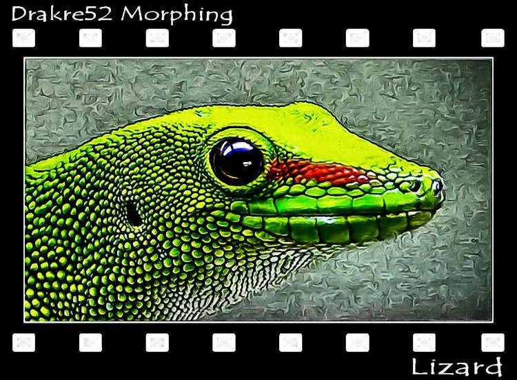 Morphing Film: Page - Lizard - drakre52 | ello