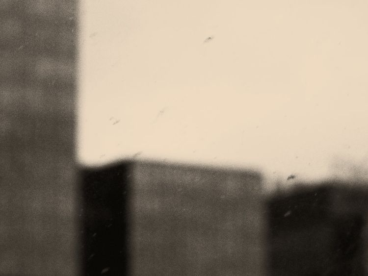 grow wild - photography, cityscapes - roni-veronica | ello