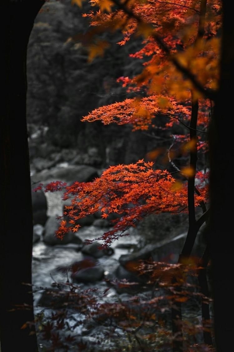 Red leaves favorite...  - shosenkyo - fokality | ello