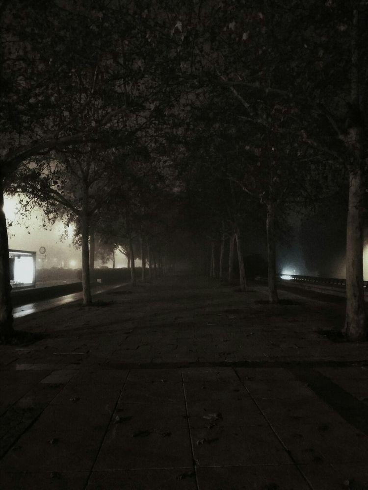 pic, art, blackandwhite, trees - invlog | ello