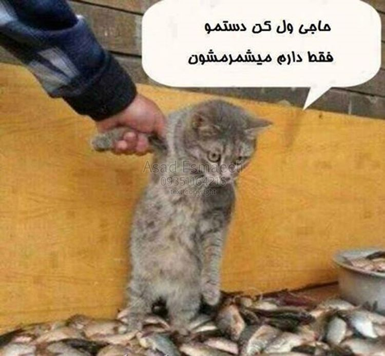 خنده دار شادی ایران جالب دیدنی  - khandekhane | ello