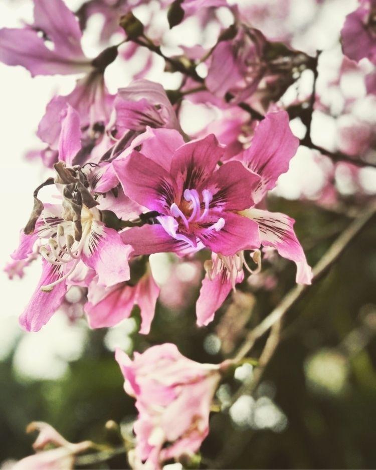 Beautiful flowers - wabearultra | ello