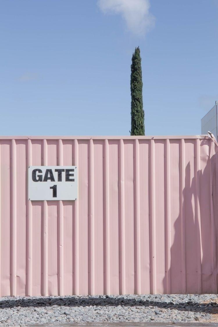 tree - cypress, pink, urban, industrial - jokalinowski_ | ello