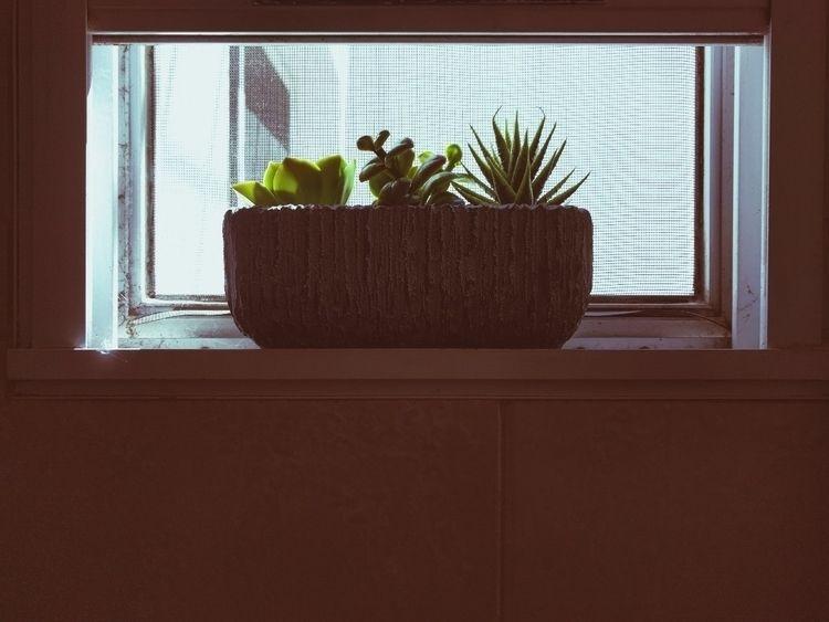 shade window - fedodes | ello
