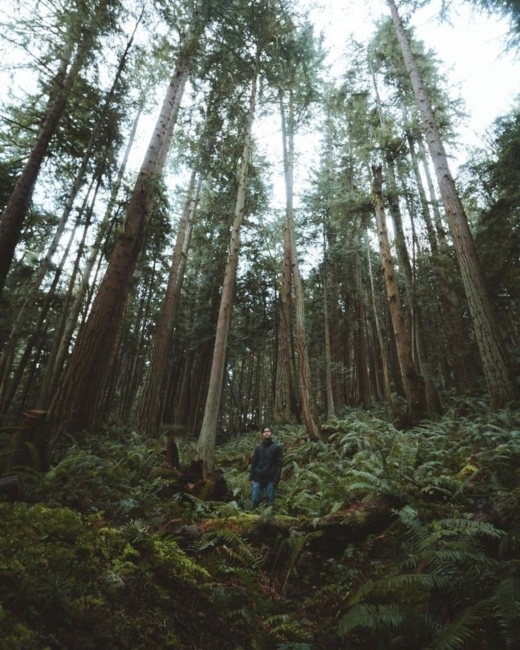 Surrounded green - nature, adventure - gradymoran | ello