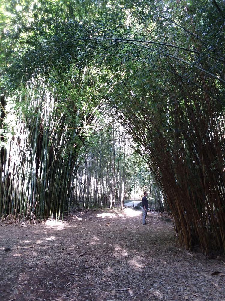 Kanapaha Gardens Gainesville, F - terry_sun | ello