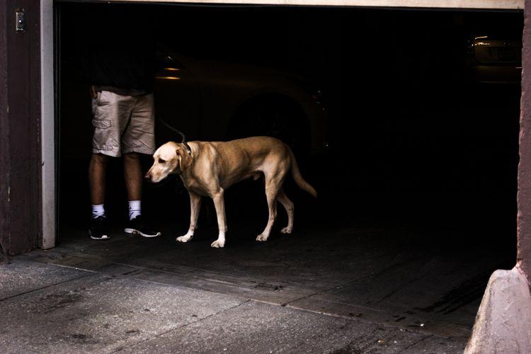 White socks dog sad - jakovunico | ello