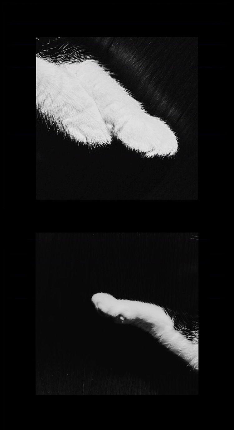 paws - blackandwhite, cat - shoejaat | ello