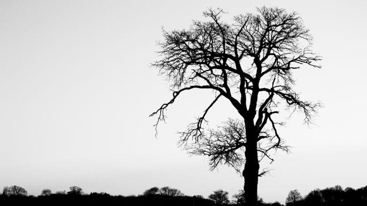 Tree Silhouette - 6, photography - davidhawkinsweeks | ello