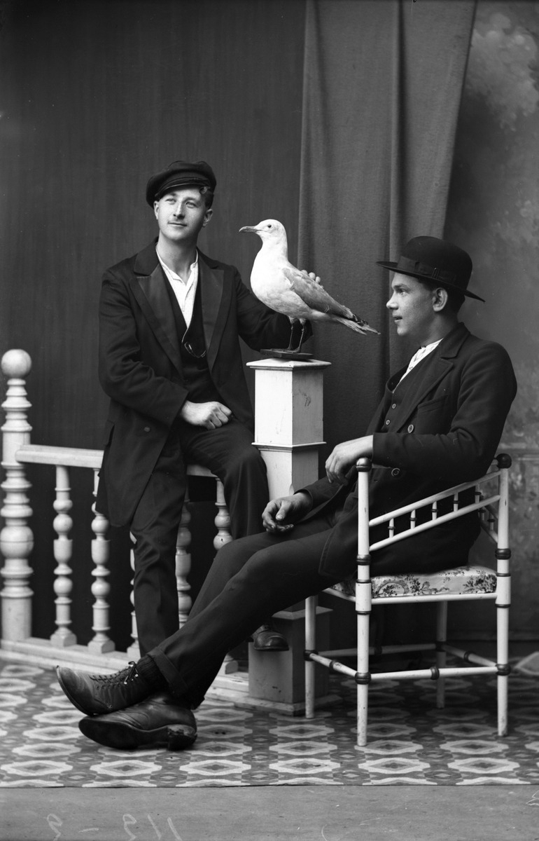 Men seagull - arthurboehm | ello