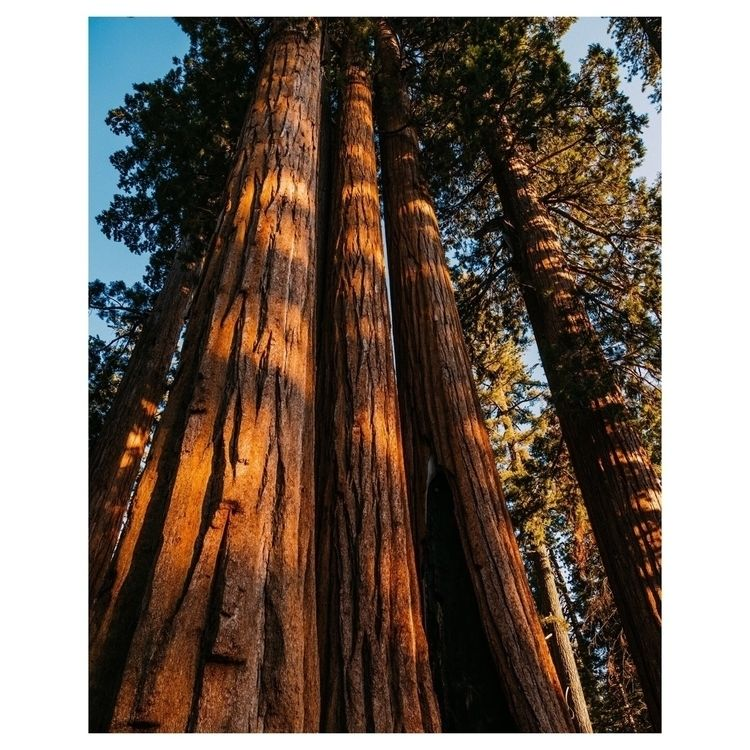 Sequoia National Park - fusillo-foto | ello