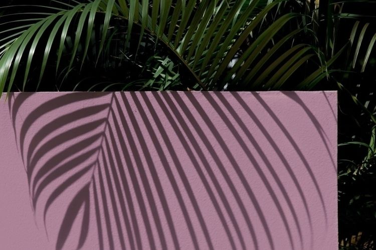 purple, shadow, shadows, fern - jokalinowski_ | ello