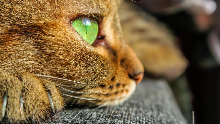 Picture cat - catcontent. - teufelchristoph | ello