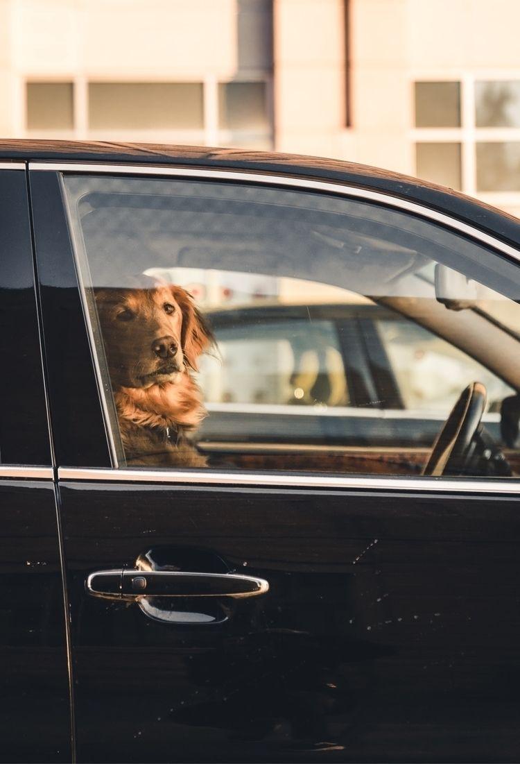 street, streetphotography, dogs - webbwonder | ello