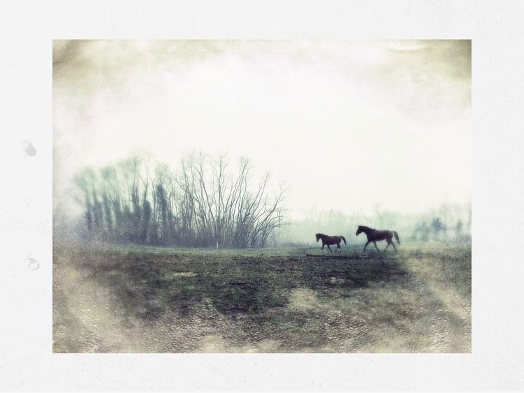 horses, day yesterday... Edited - cristinarossi | ello