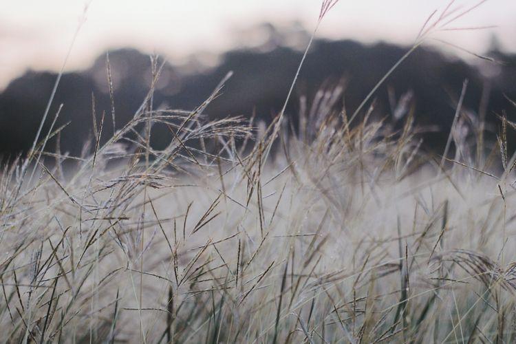 Listen wind - nature, wild, outdoors - sergiocorzo | ello