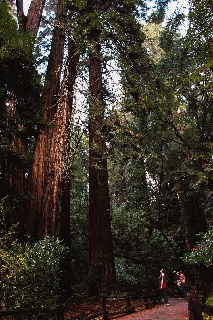 Muir Woods - MuirWoods, Nature, Photography - photoscane | ello