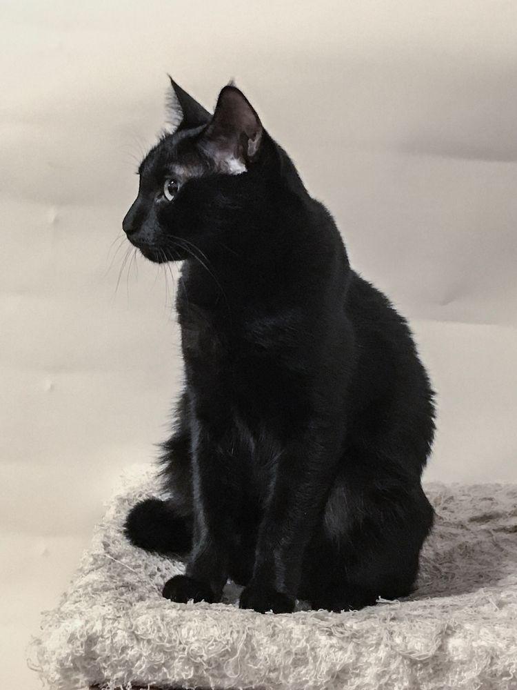Dart Cat Black Cats Tower - brandietan   ello