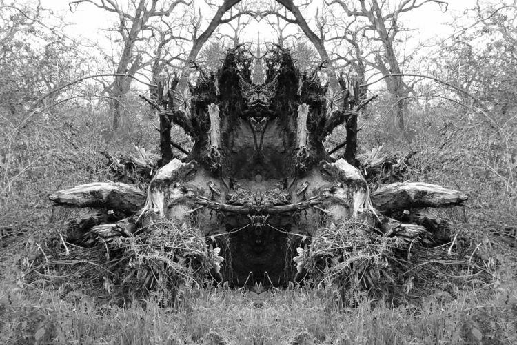 ENTRY... previous timber trash  - zygzwurx | ello