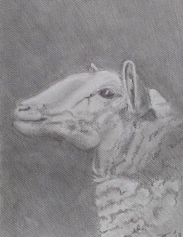 latest illustration, sheep - drawing - bsofies | ello