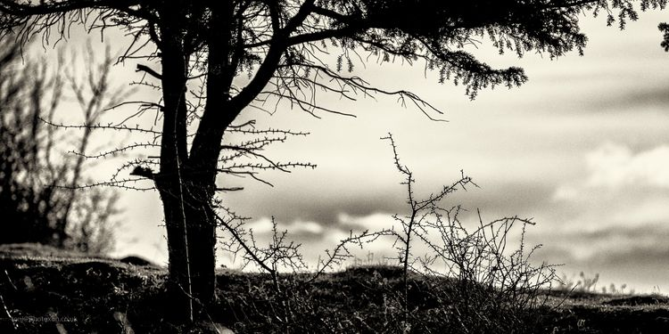Prickles - tree, prickles, thorns - toni_ertl | ello