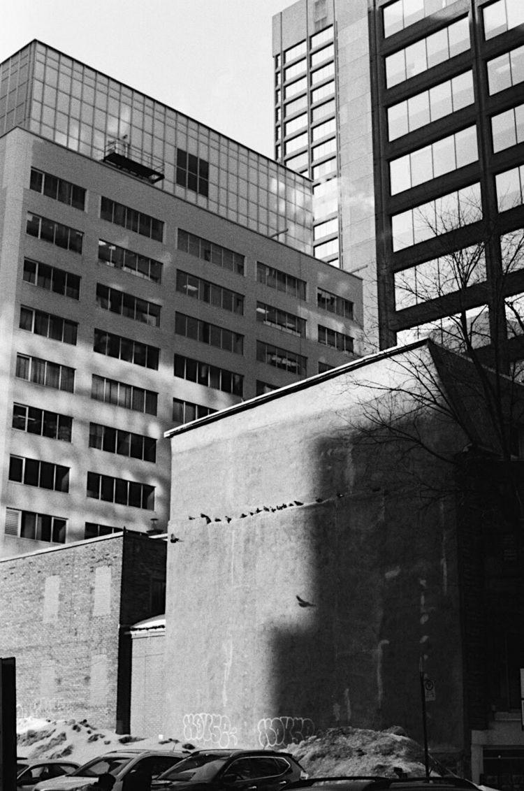 Birds, Montreal 2018 - film, ellopentax - iamaxime | ello