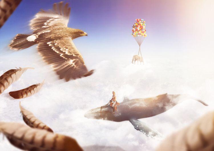 Title image: Eagle Tomb Raider  - lekoarts | ello