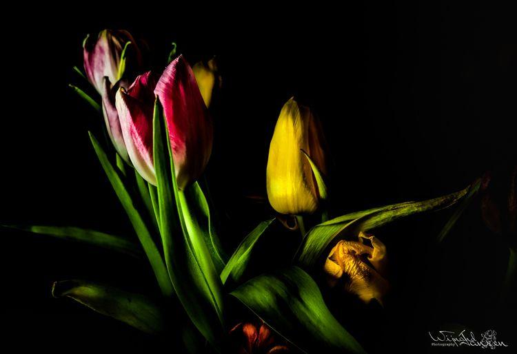 Flashing tulips 2 - artmen | ello