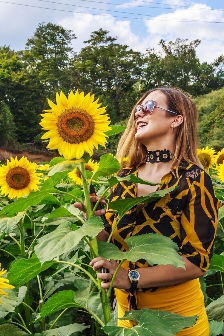 sunflowers, sunflowerfield, happy - nikkyblade | ello
