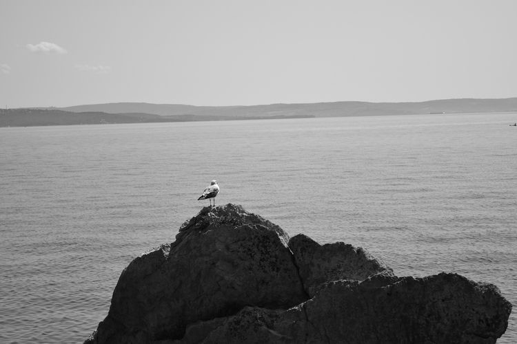Rock sea II. Triest, Italy, 201 - ivanlich | ello