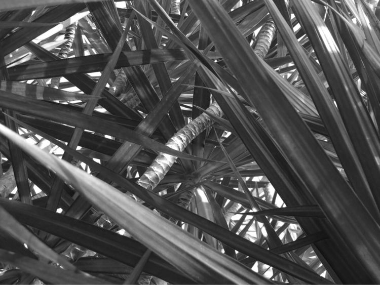 Palm Tree Jungle Apps - mikefl99 - mikefl99   ello