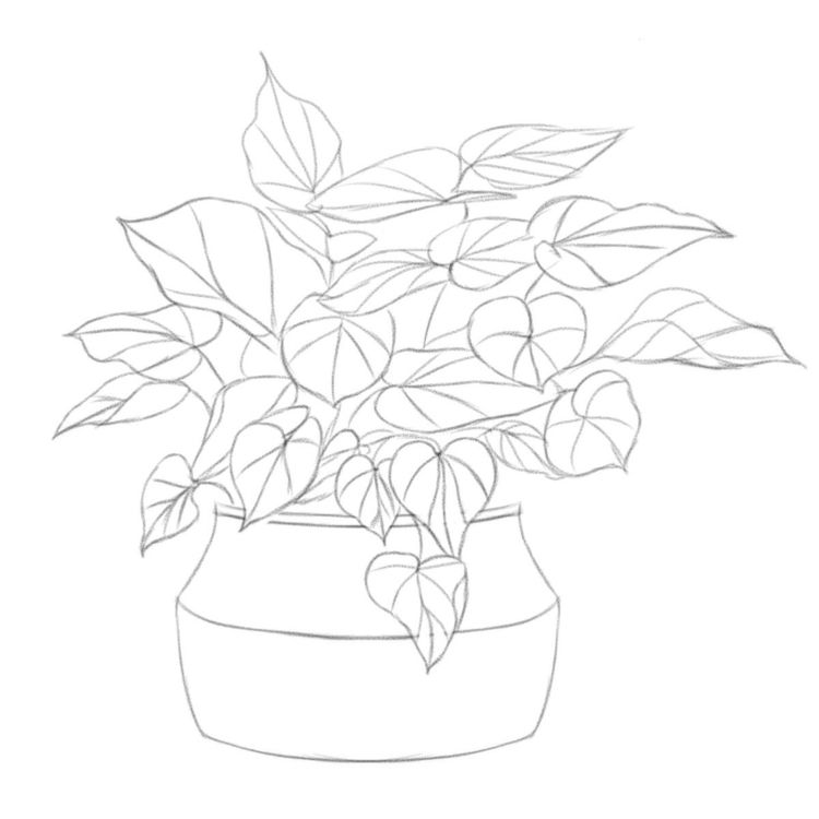 Plant sketch - art, artist, illustration - garvoids | ello
