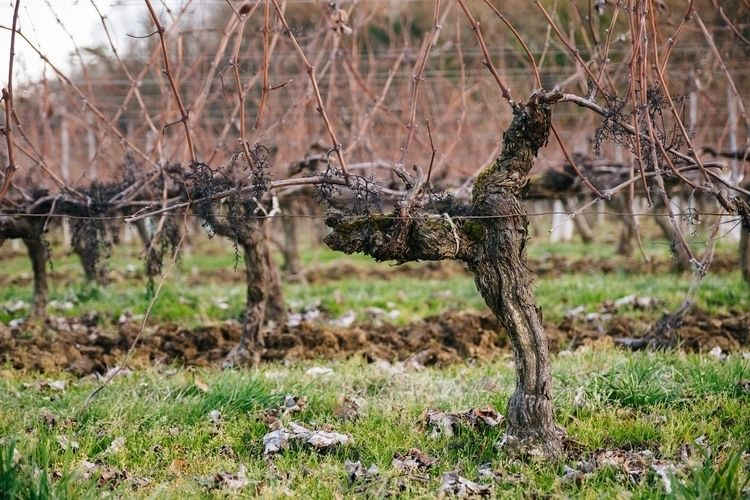 Wine - france, bordeaux, vineyards - jdelrivero   ello