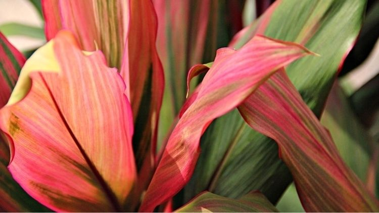 plants, lush, life, green, pink - bolcol | ello