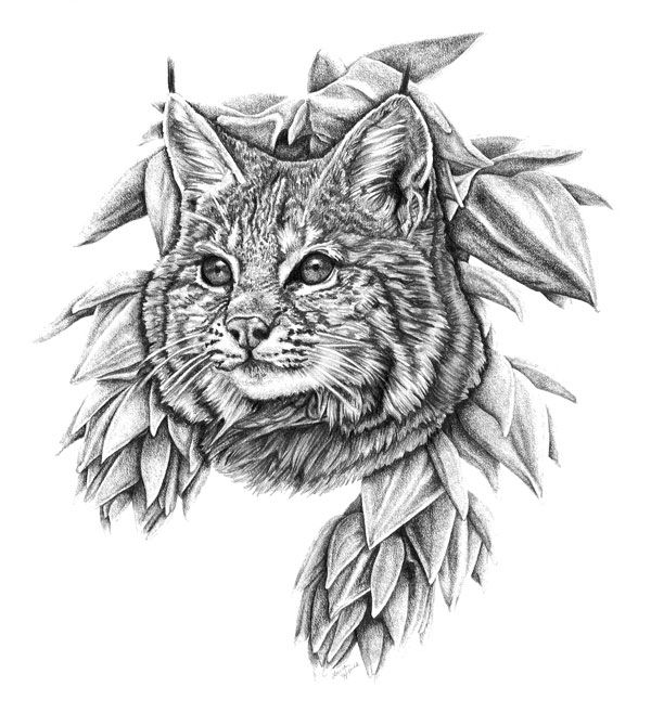 Beasts Desert: Bobcat, Pencil 2 - laurahines | ello