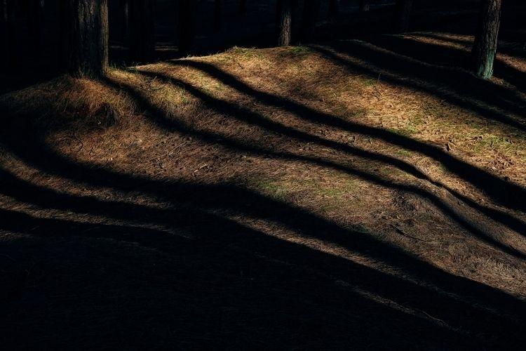 wabisabi, zen, forest, shadows - simonjob | ello